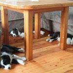 7 Wochen, alle suchen sich ihren Platz zum Schlafen