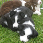 Bonny und Balou 6 Wochen