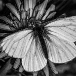 Hermosa mariposa von Hannah M.