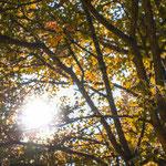 """3. Platz (Plus-Kategorie): """"Die Sonne bricht die Farben"""" von Hannah"""