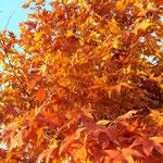 "1. Platz (Plus-Kategorie): ""goldene Stunde im Herbst"" von Andrea"