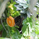 1. Platz (Mittelstufe): Wenn das Leben dir Orangen gibt, dann mache LiImonade daraus von Jana G.