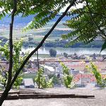 Blick vom Kögl auf die Donau