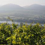 Die Donau erhöht die Temperatur um 1Grad im Jahresdurchschnitt