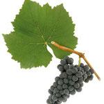 Blauer Burgunder (Pinot Noir)
