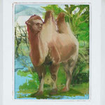 A Camel In The Backyard / oil on plexiglass, photocopy  300 * 249 mm / 2010