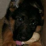 7/12/2003 Hobbit @ 2,5 months