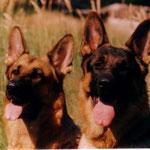 Фиджи и Хоббит. 2004 г.