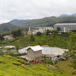 Teefabrik in Sri Lanka, Nuwara Eliya