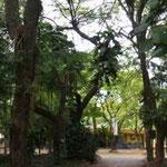Pflanzenwelt in Santa Helena III