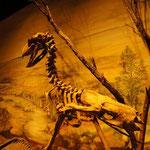 Auf den Spuren der Dinos