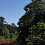 kein Mensch weit und breit und nur die Strasse und der Dschungel links und rechts