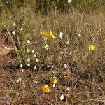 Schmetterlinge zu tausenden