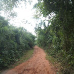 Der Weg wird schmal zu der Lagune