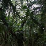 Pflanzenwelt II