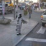 Zebras helfen in La Paz über die Strasse