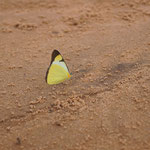 Die Schmetterlinge welche immer um die Mittagszeit kommen