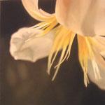 MIrada discreta XII, óleo sobre lienzo, 30x30 cms