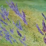 Lavendelblüte im Wind