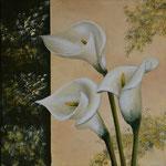 Callablüten - verkannte Schönheiten