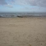 Noch sind keine Strandkörbe am Strand von Cuxhaven Duhnen