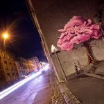 Photo : Mathieu Le Gall