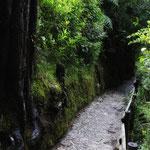 Medellín - Piedras blancas