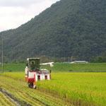 4.稲刈り