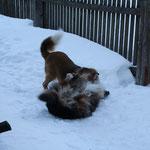 ... im Schnee macht alles noch mehr Spaß !