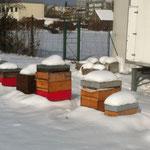 Bienenstand in Wien im Jänner