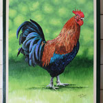 coq 46 x38 non disponible