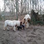 Unsere Ponys und unsere Mädchen - eine Superkombi!