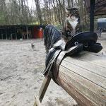 Luckys Lieblingsplatz - unser Holzpferd. Hier hat er den totalen Ponyhof-Überblick :-)