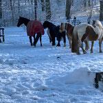 Unsere Großen finden den Schnee toll!