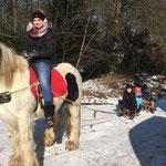 Die Ponys ziehen Schlitten als hätten sie nie etwas anderes getan!