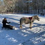 Der erste Schnee - wir üben mit den Ponys Schlitten fahren!