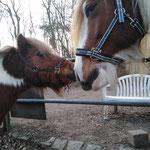 Nils und Akando - der Größenunterschied stört die beiden Ponyfreunde überhaupt nicht!
