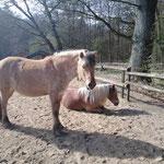 Sonnenstrahlen Ende März - Jette und Max genießen es!