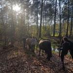 Reitkinder und Ponys bahnen sich ihren Weg...