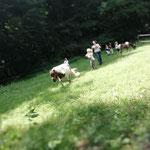 Nils hätte gern den Grashalm hinten links. Da rennt er hin - und die Kinder hinterher!