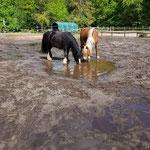 Die Pfütze nach dem Gewitterregen ist für Clairchen und Jette sooo spannend!