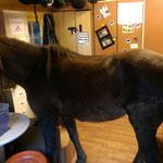 Wir sind mit unseren Ponys sehr innig... Sie folgen uns bis ins Ponyhof-Büro ;-)