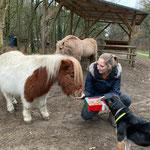 Das sind Pony-Leckerlies. Aber das Joey überhaupt nicht, er möchte auch welche abhaben.