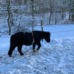 Bounty findet den Schnee noch etwas merkwürdig...