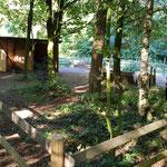 Bei uns stehen die Ponys voll im Wald...! Unser neuer Shetty Padock.