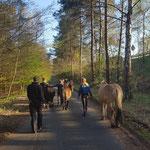 Kletterausflug - wir führen unsere Ponys durch den Wald