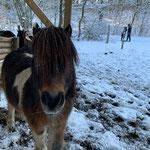 Pumuckl möchte auch die Kutsche ziehen - aber er ist einfach zu klein...