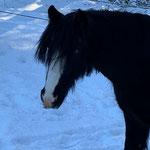 Clairchen ist noch skeptisch. So viel Schnee hat sie noch nie gesehen.