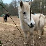 Ginger im Lockdown - schon komisch so ein Ponyhof ohne Kinder...