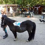 Ein 50iger Pony... Alle Shettys haben den Geburtstag mitgefeiert!
